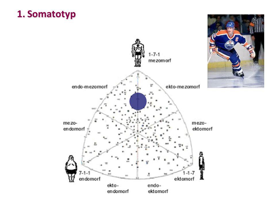 1.Somatotyp