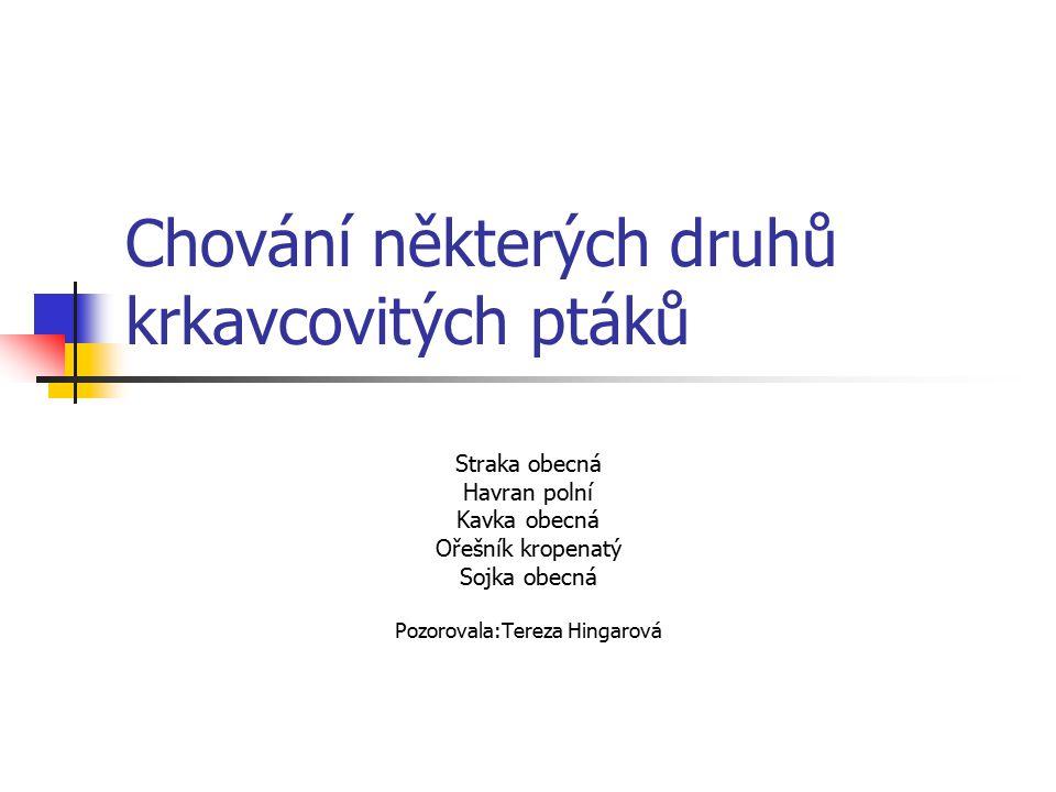 Chování některých druhů krkavcovitých ptáků Straka obecná Havran polní Kavka obecná Ořešník kropenatý Sojka obecná Pozorovala:Tereza Hingarová