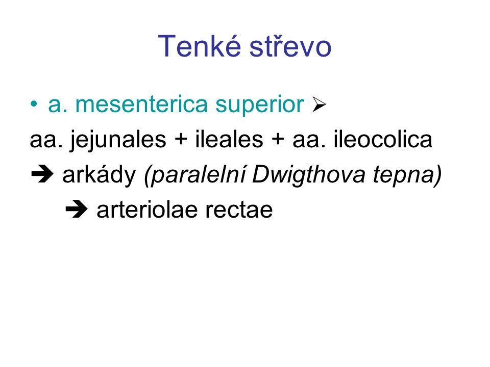 Tenké střevo a. mesenterica superior  aa. jejunales + ileales + aa. ileocolica  arkády (paralelní Dwigthova tepna)  arteriolae rectae