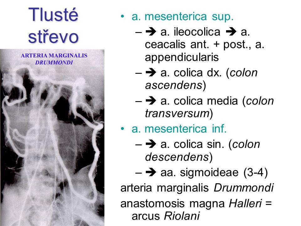 Tlusté střevo a. mesenterica sup. –  a. ileocolica  a. ceacalis ant. + post., a. appendicularis –  a. colica dx. (colon ascendens) –  a. colica me