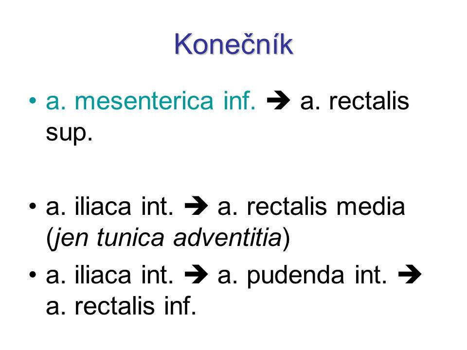 Konečník a. mesenterica inf.  a. rectalis sup. a. iliaca int.  a. rectalis media (jen tunica adventitia) a. iliaca int.  a. pudenda int.  a. recta