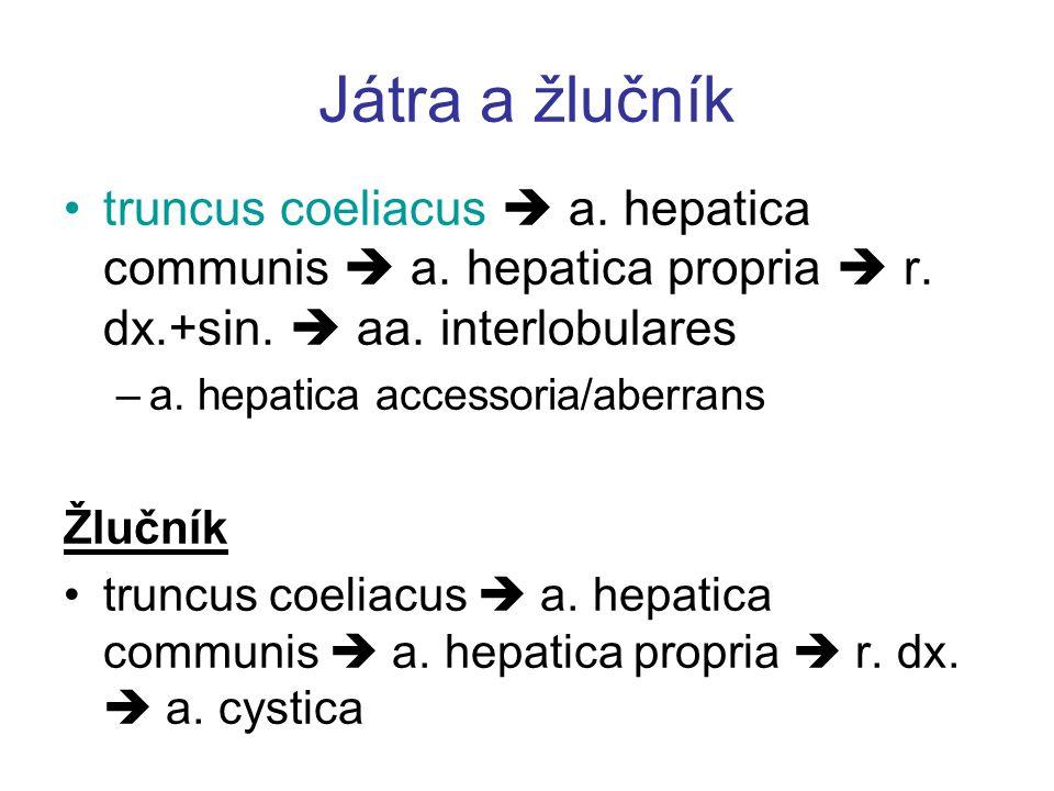 Játra a žlučník truncus coeliacus  a. hepatica communis  a. hepatica propria  r. dx.+sin.  aa. interlobulares –a. hepatica accessoria/aberrans Žlu