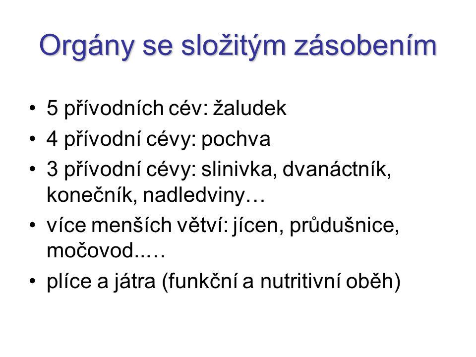 Varle + nadvarle aorta abdominalis  a.