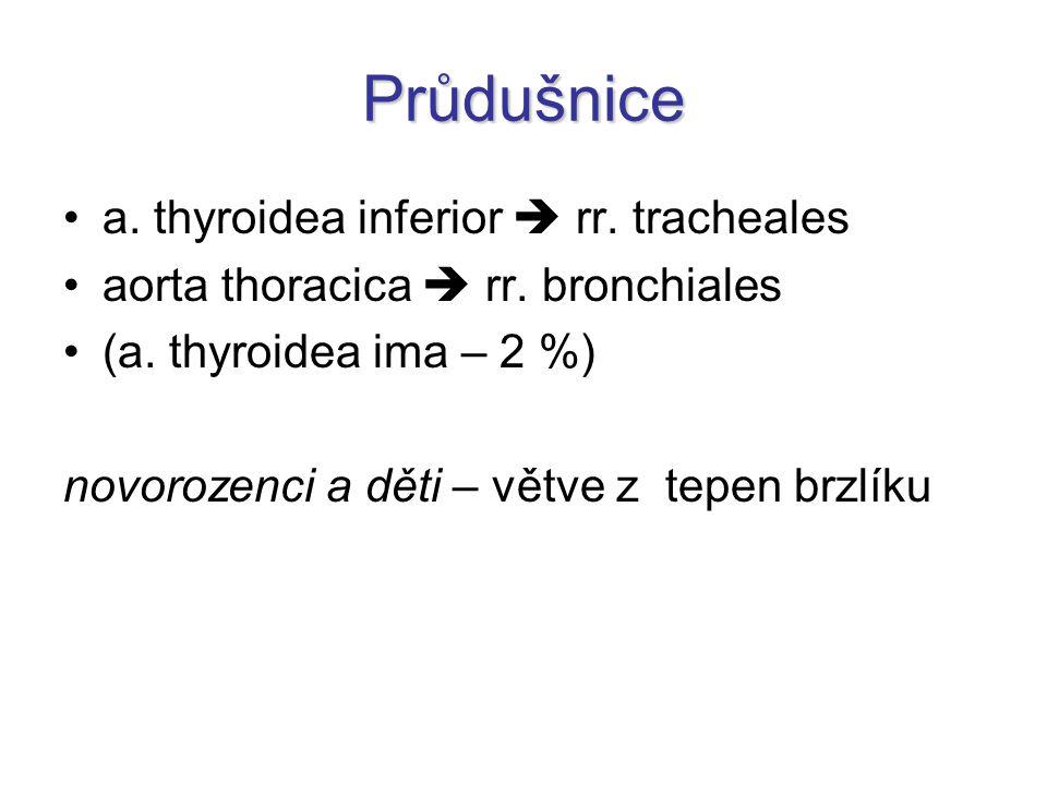 Průdušnice a. thyroidea inferior  rr. tracheales aorta thoracica  rr. bronchiales (a. thyroidea ima – 2 %) novorozenci a děti – větve z tepen brzlík