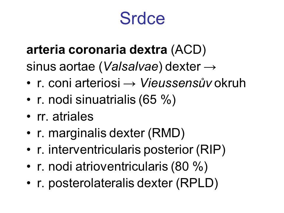 Srdce arteria coronaria dextra (ACD) sinus aortae (Valsalvae) dexter → r. coni arteriosi → Vieussensův okruh r. nodi sinuatrialis (65 %) rr. atriales
