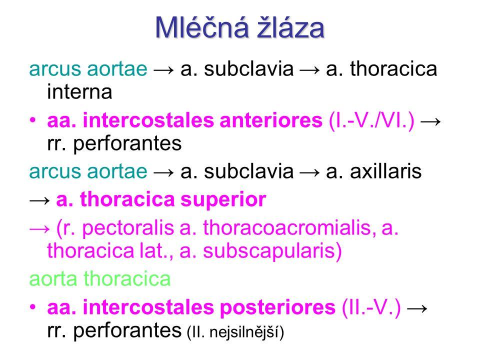 Mléčná žláza arcus aortae → a. subclavia → a. thoracica interna aa. intercostales anteriores (I.-V./VI.) → rr. perforantes arcus aortae → a. subclavia