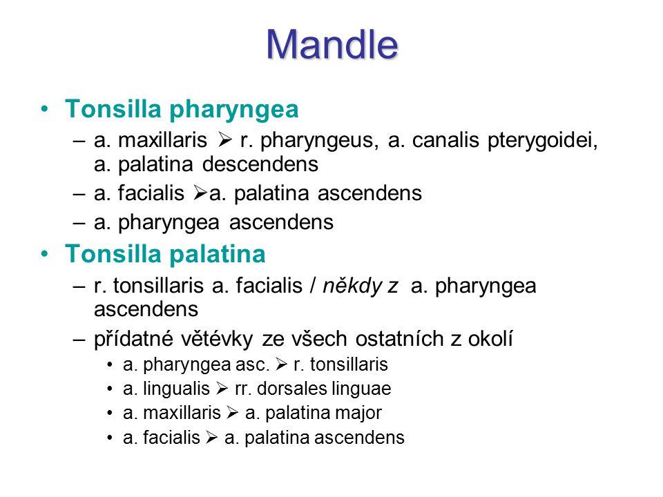 Mandle Tonsilla pharyngea –a. maxillaris  r. pharyngeus, a. canalis pterygoidei, a. palatina descendens –a. facialis  a. palatina ascendens –a. phar