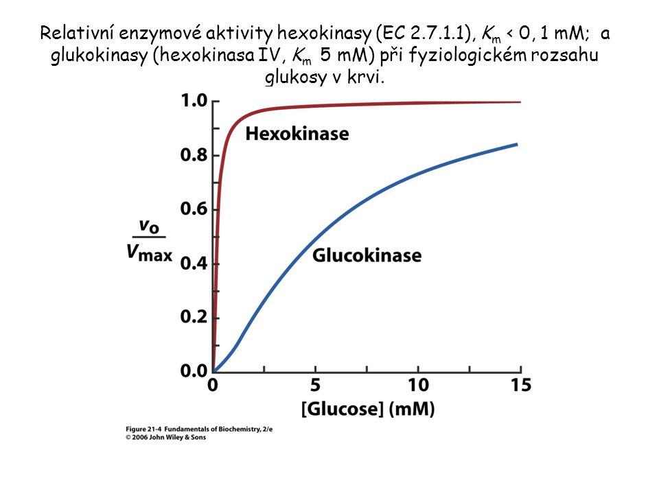 Relativní enzymové aktivity hexokinasy (EC 2.7.1.1), K m ‹ 0, 1 mM; a glukokinasy (hexokinasa IV, K m 5 mM) při fyziologickém rozsahu glukosy v krvi.