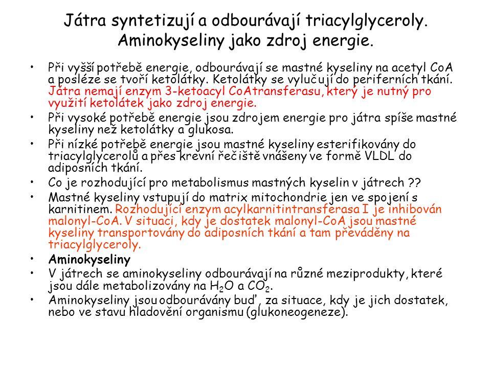Játra syntetizují a odbourávají triacylglyceroly. Aminokyseliny jako zdroj energie. Při vyšší potřebě energie, odbourávají se mastné kyseliny na acety