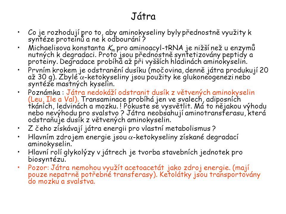Játra Co je rozhodují pro to, aby aminokyseliny byly přednostně využity k syntéze proteinů a ne k odbourání ? Michaelisova konstanta K m pro aminoacyl