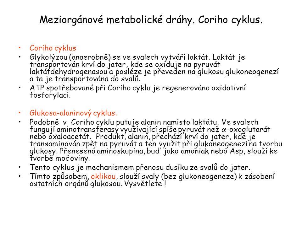 Meziorgánové metabolické dráhy. Coriho cyklus. Coriho cyklus Glykolýzou (anaerobně) se ve svalech vytváří laktát. Laktát je transportován krví do jate