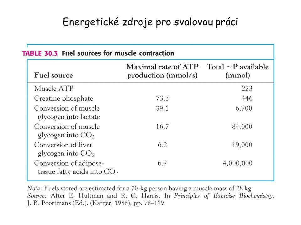 Energetické zdroje pro svalovou práci