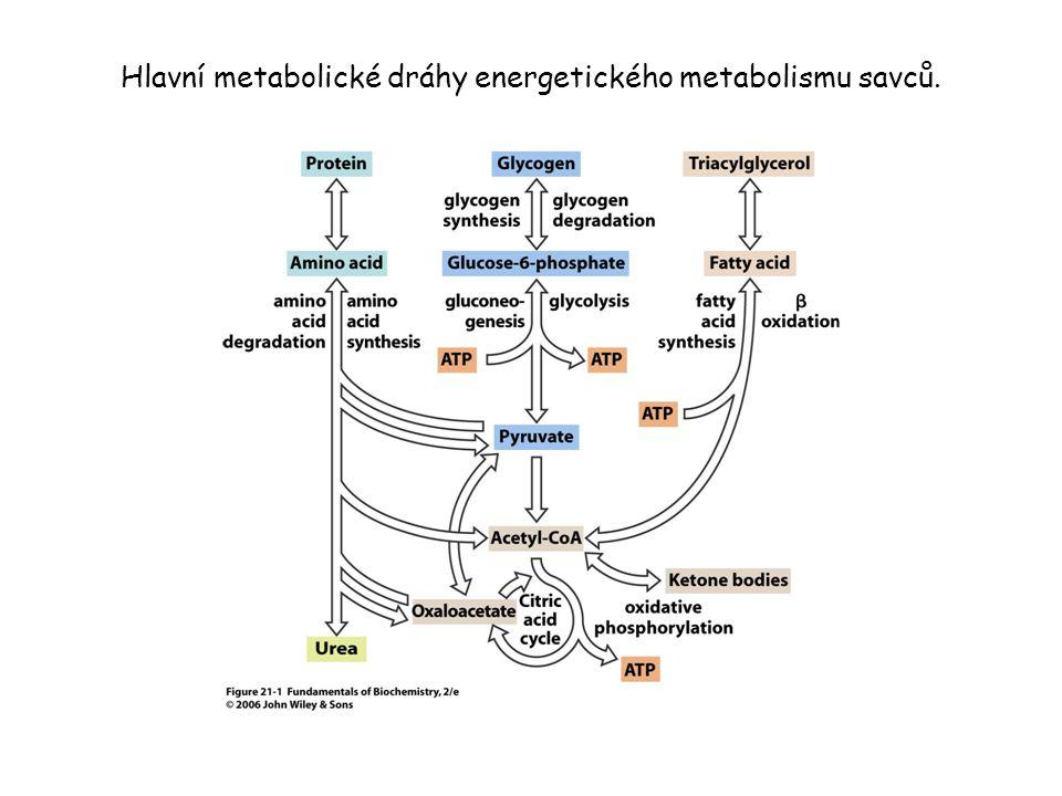 Hlavní metabolické dráhy energetického metabolismu savců.