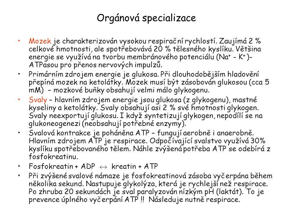 Zdroje ATP během sportovních aktivit u lidí.