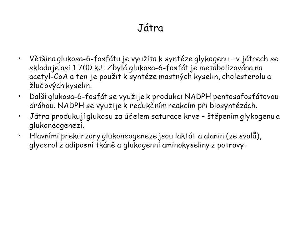 Aminotransferasová reakce ve svalech