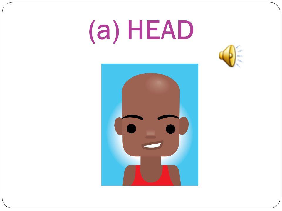 (a) HEAD