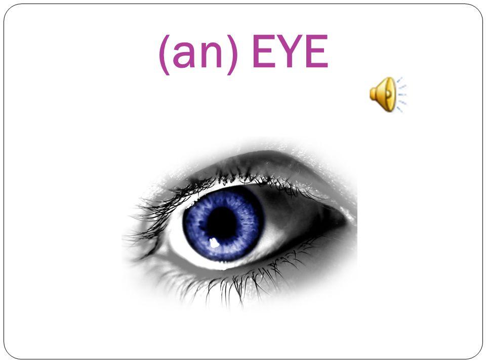 WHAT'S THIS? This is a) a HEAD b) an EYE c) an EAR