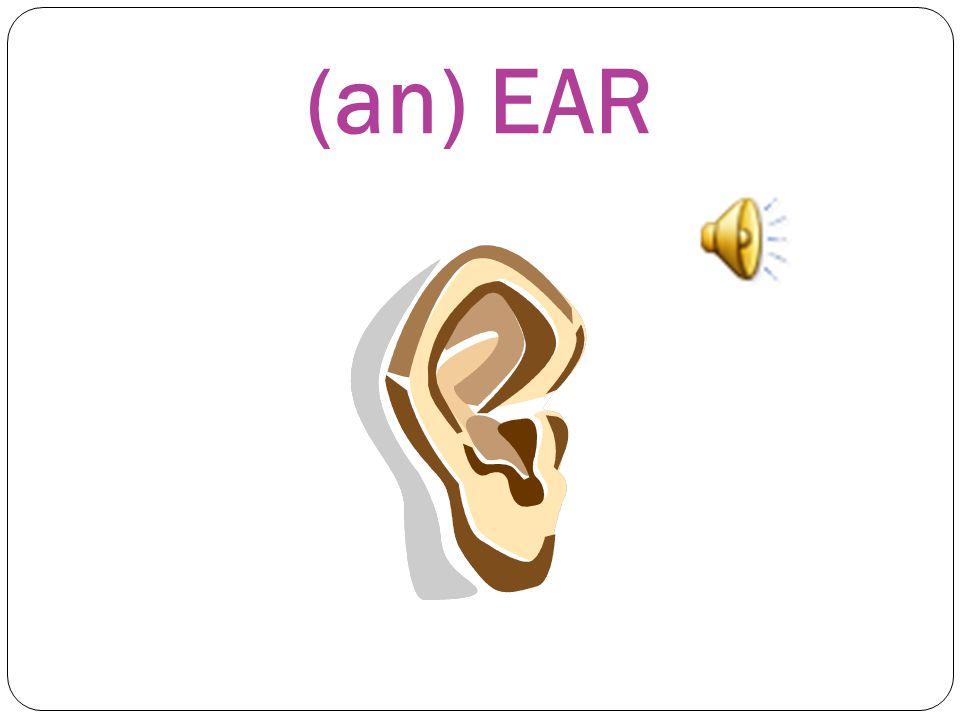(an) EAR