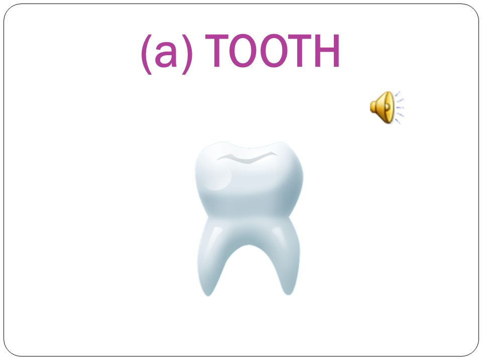 WHAT'S THIS? This is a) a TOOTH b) a MOUTH c) an EYE