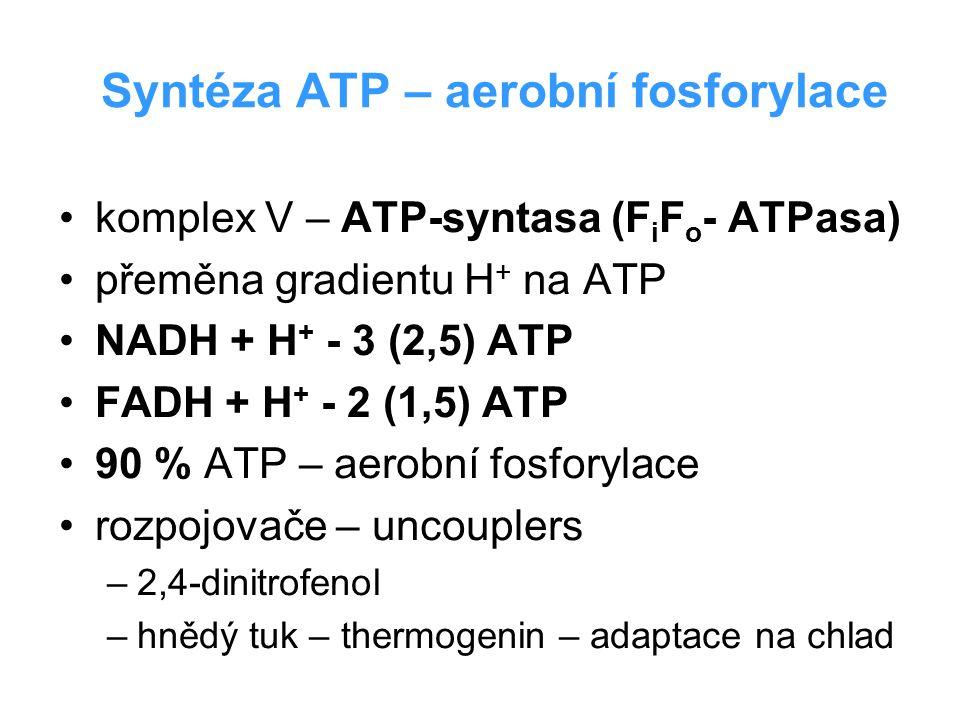 Syntéza ATP – aerobní fosforylace komplex V – ATP-syntasa (F i F o - ATPasa) přeměna gradientu H + na ATP NADH + H + - 3 (2,5) ATP FADH + H + - 2 (1,5