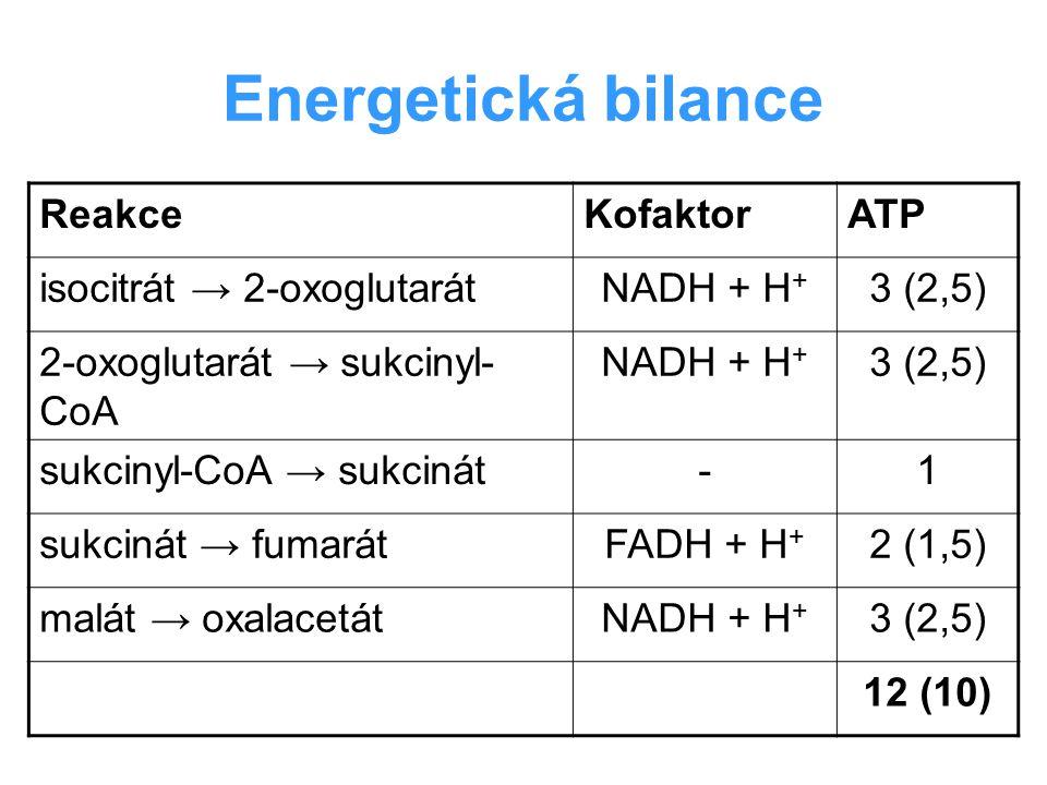 Energetická bilance ReakceKofaktorATP isocitrát → 2-oxoglutarátNADH + H + 3 (2,5) 2-oxoglutarát → sukcinyl- CoA NADH + H + 3 (2,5) sukcinyl-CoA → sukc