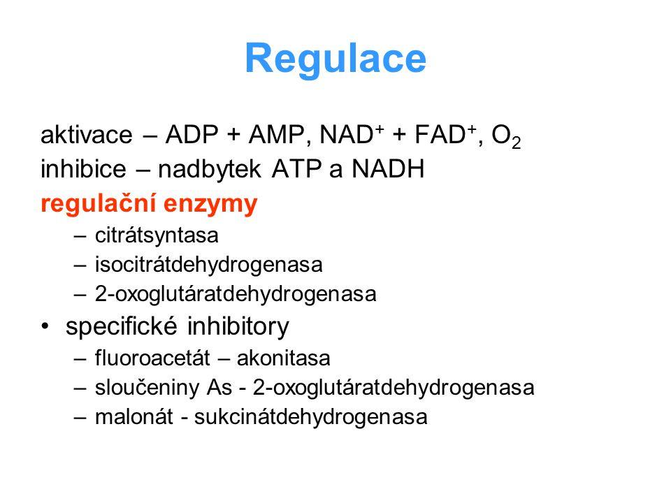 Regulace aktivace – ADP + AMP, NAD + + FAD +, O 2 inhibice – nadbytek ATP a NADH regulační enzymy –citrátsyntasa –isocitrátdehydrogenasa –2-oxoglutára