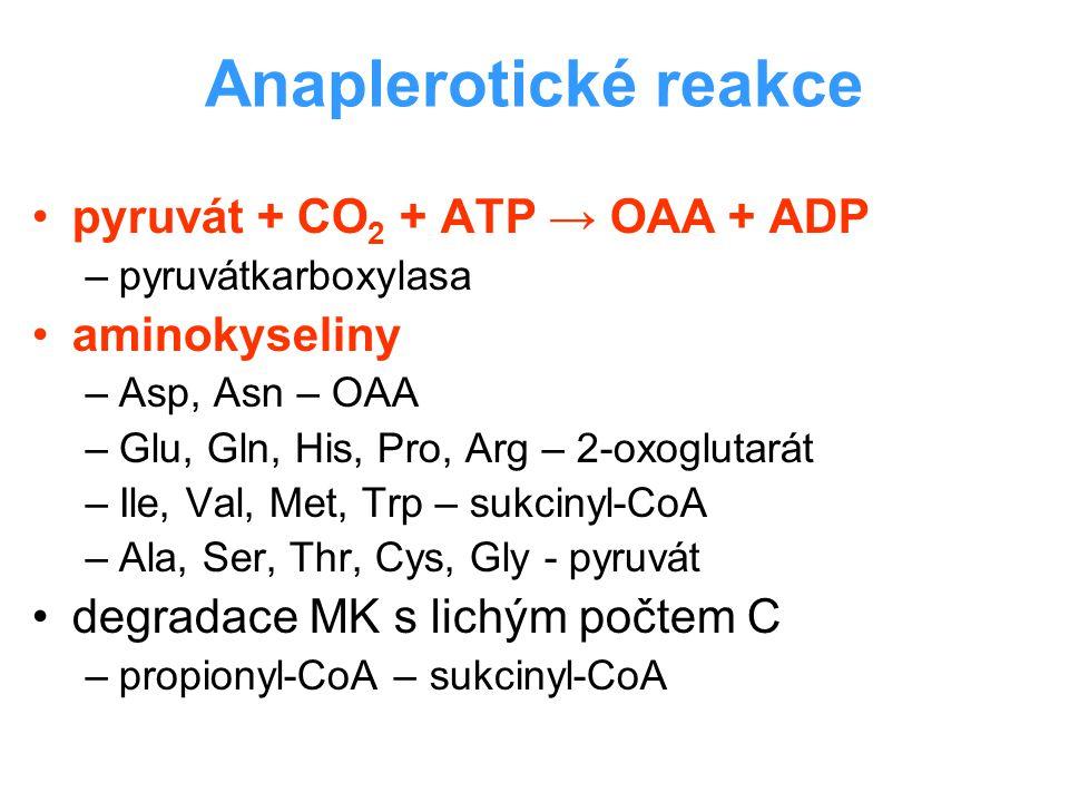 Anaplerotické reakce pyruvát + CO 2 + ATP → OAA + ADP –pyruvátkarboxylasa aminokyseliny –Asp, Asn – OAA –Glu, Gln, His, Pro, Arg – 2-oxoglutarát –Ile,