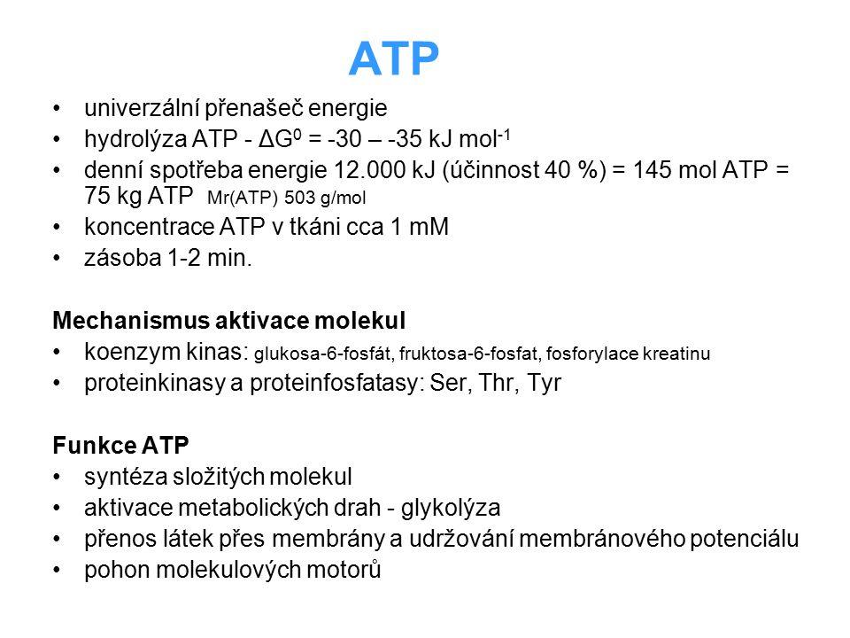ATP univerzální přenašeč energie hydrolýza ATP - ΔG 0 = -30 – -35 kJ mol -1 denní spotřeba energie 12.000 kJ (účinnost 40 %) = 145 mol ATP = 75 kg ATP