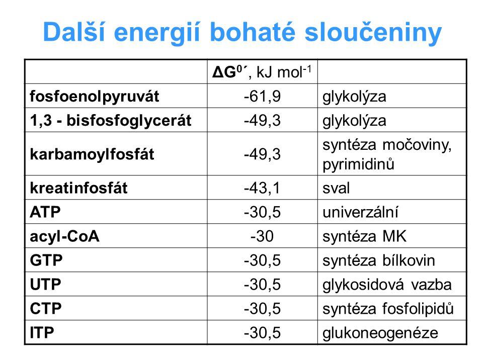 Další energií bohaté sloučeniny ΔG 0 ´, kJ mol -1 fosfoenolpyruvát-61,9glykolýza 1,3 - bisfosfoglycerát-49,3glykolýza karbamoylfosfát-49,3 syntéza moč