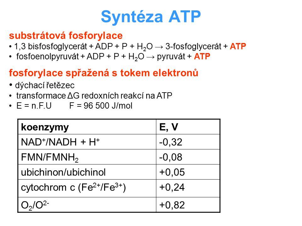 Syntéza ATP koenzymyE, V NAD + /NADH + H + -0,32 FMN/FMNH 2 -0,08 ubichinon/ubichinol+0,05 cytochrom c (Fe 2+ /Fe 3+ )+0,24 O 2 /O 2- +0,82 substrátov