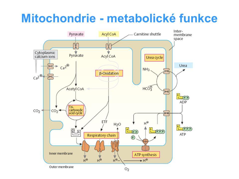 Enzymy dýchacího řetězce komplex I - NADH-ubichinonreduktasa komplex II - sukcinát-ubichinonreduktasa komplex III - ubichinol-cyt c-reduktasa komplex IV – cytochrom c-oxidasa NAD + /NADH + H + FAD + /FADH + H + FMN + /FMNH + H + ubichinol/ubichinon