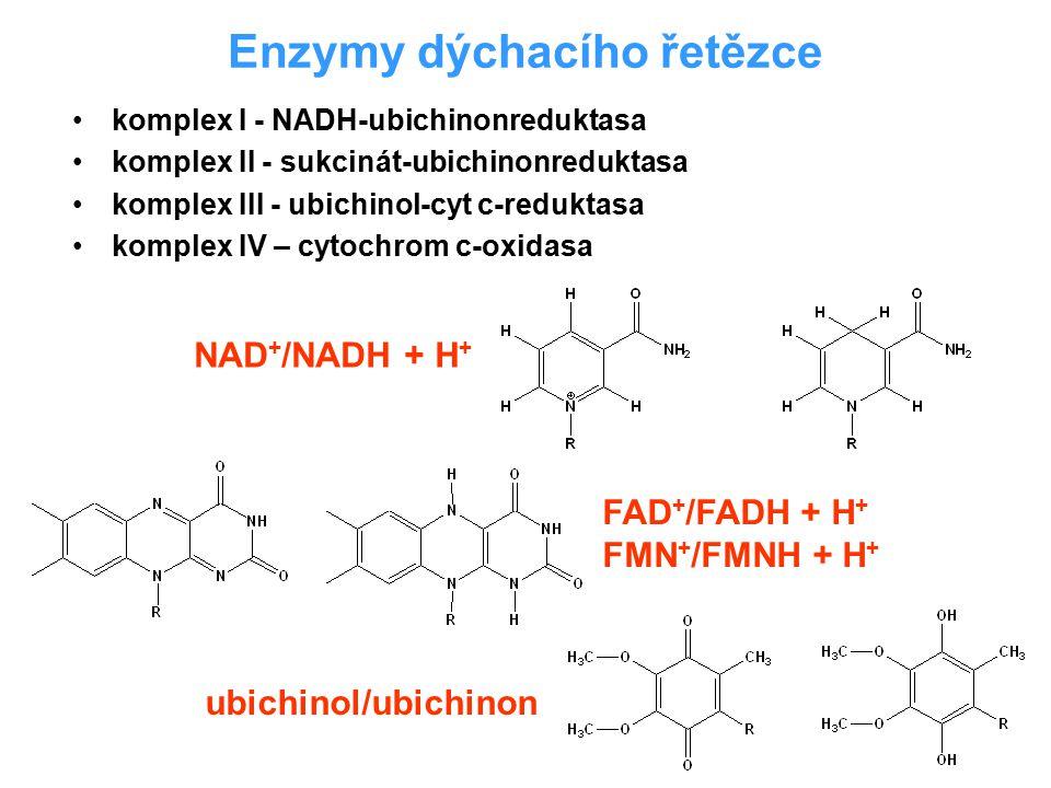 Enzymy dýchacího řetězce komplex I - NADH-ubichinonreduktasa komplex II - sukcinát-ubichinonreduktasa komplex III - ubichinol-cyt c-reduktasa komplex