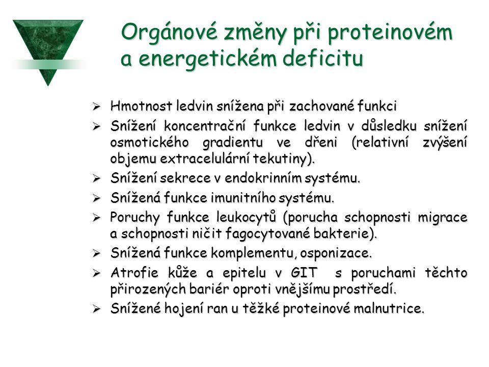 Orgánové změny při proteinovém a energetickém deficitu  Hmotnost ledvin snížena při zachované funkci  Snížení koncentrační funkce ledvin v důsledku snížení osmotického gradientu ve dřeni (relativní zvýšení objemu extracelulární tekutiny).
