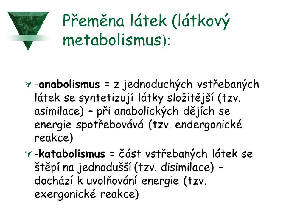 Přeměna látek (látkový metabolismus ):  -anabolismus = z jednoduchých vstřebaných látek se syntetizují látky složitější (tzv.