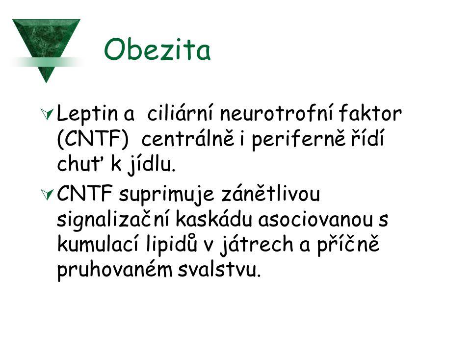 Obezita  Leptin a ciliární neurotrofní faktor (CNTF) centrálně i periferně řídí chuť k jídlu.