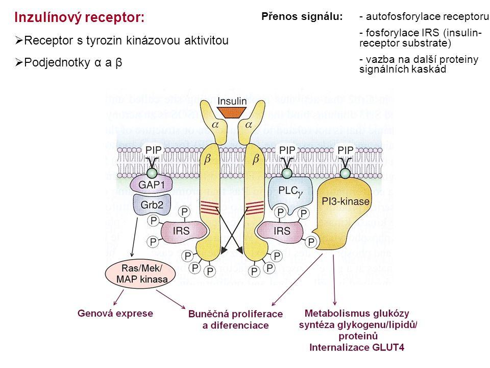 Inzulínový receptor:  Receptor s tyrozin kinázovou aktivitou  Podjednotky α a β Přenos signálu:- autofosforylace receptoru - fosforylace IRS (insulin- receptor substrate) - vazba na další proteiny signálních kaskád