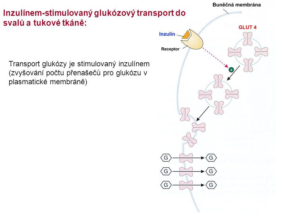 Inzulínem-stimulovaný glukózový transport do svalů a tukové tkáně: Transport glukózy je stimulovaný inzulínem (zvyšování počtu přenašečů pro glukózu v plasmatické membráně)
