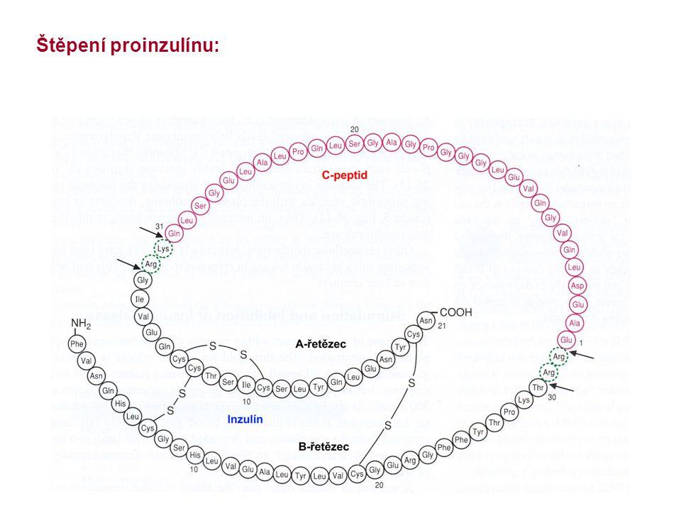 Inzulín - místa působení: Ukládání energetických zásob transport glukózy do tkáně (svaly, tuková tkáň) syntéza glykogenu (játra, svaly) syntéza TG (játra, tuková tkáň) syntéza proteinů (játra, svaly) inhibice mobilizace energetických zásob