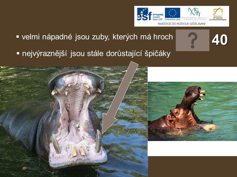 Použité zdroje: File:Hippopotamus (5).jpg.In: JUST CHAOS.