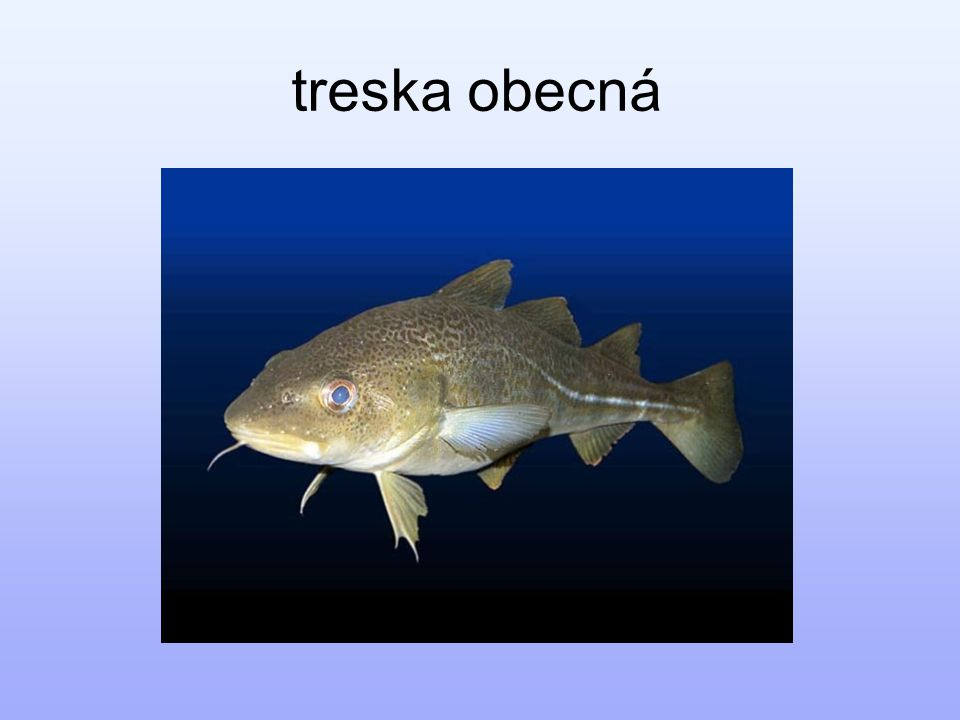 Zdroje: http://upload.wikimedia.org/ http://www.naturephoto.cz/ http://www.e-planeta.cz/ http://www.coneshell.net/ http://elrinconmarinos-nogasteropodos.iespana.es/ http://img15.nnm.ru/ http://materialgirlsblog.com/ http://www.africapoint.net/ http://www.stoplus.cz/ http://www.sunshineserpents.com/ http://qjmed.oxfordjournals.org/ http://www.redorbit.com/ http://zivazeme.cz/ http://www.glaucus.org.uk/ Kvasničková, D.
