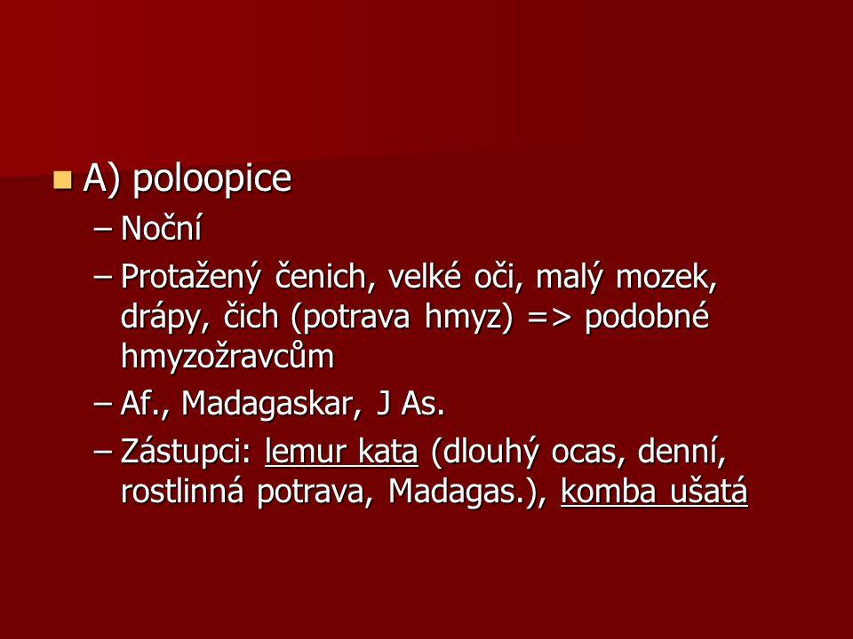 A) poloopice A) poloopice –Noční –Protažený čenich, velké oči, malý mozek, drápy, čich (potrava hmyz) => podobné hmyzožravcům –Af., Madagaskar, J As.