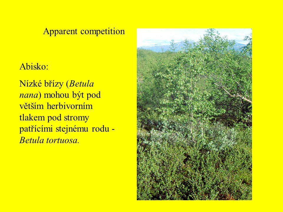 Apparent competition Abisko: Nízké břízy (Betula nana) mohou být pod větším herbivorním tlakem pod stromy patřícími stejnému rodu - Betula tortuosa.