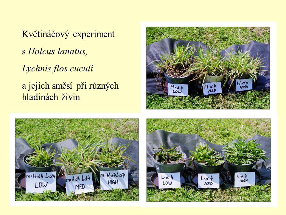 Květináčový experiment s Holcus lanatus, Lychnis flos cuculi a jejich směsí při různých hladinách živin