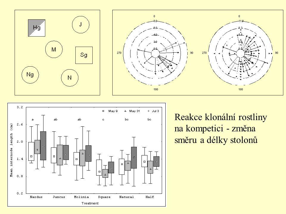 Reakce klonální rostliny na kompetici - změna směru a délky stolonů