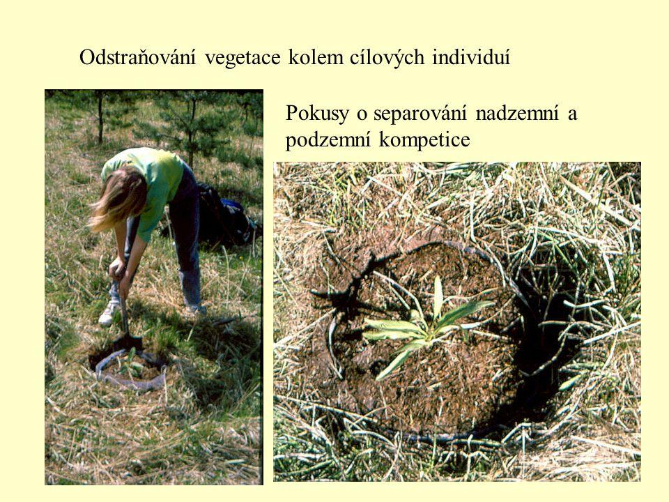 Odstraňování vegetace kolem cílových individuí Pokusy o separování nadzemní a podzemní kompetice