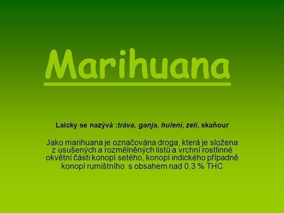 Marihuana Laicky se nazývá :tráva, ganja, hulení, zelí, skaňour Jako marihuana je označována droga, která je složena z usušených a rozmělněných listů