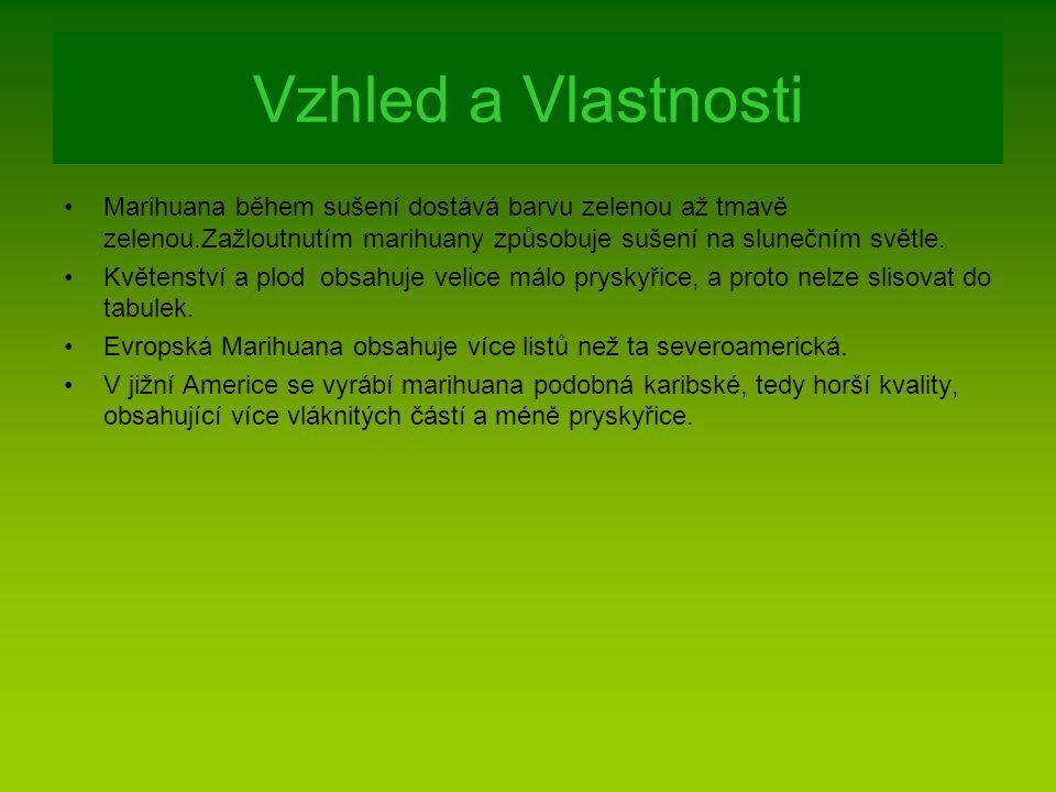 Vzhled a Vlastnosti Marihuana během sušení dostává barvu zelenou až tmavě zelenou.Zažloutnutím marihuany způsobuje sušení na slunečním světle. Květens