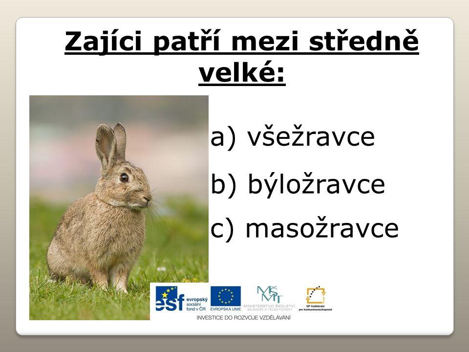 Zajíci patří mezi středně velké: a) všežravce b) býložravce c) masožravce