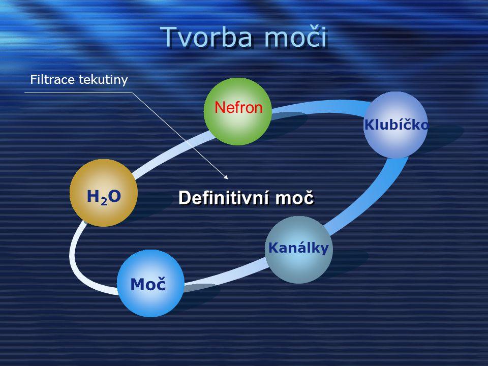 Tvorba moči H2OH2O Klubíčko Kanálky Moč Definitivní moč Filtrace tekutiny Nefron