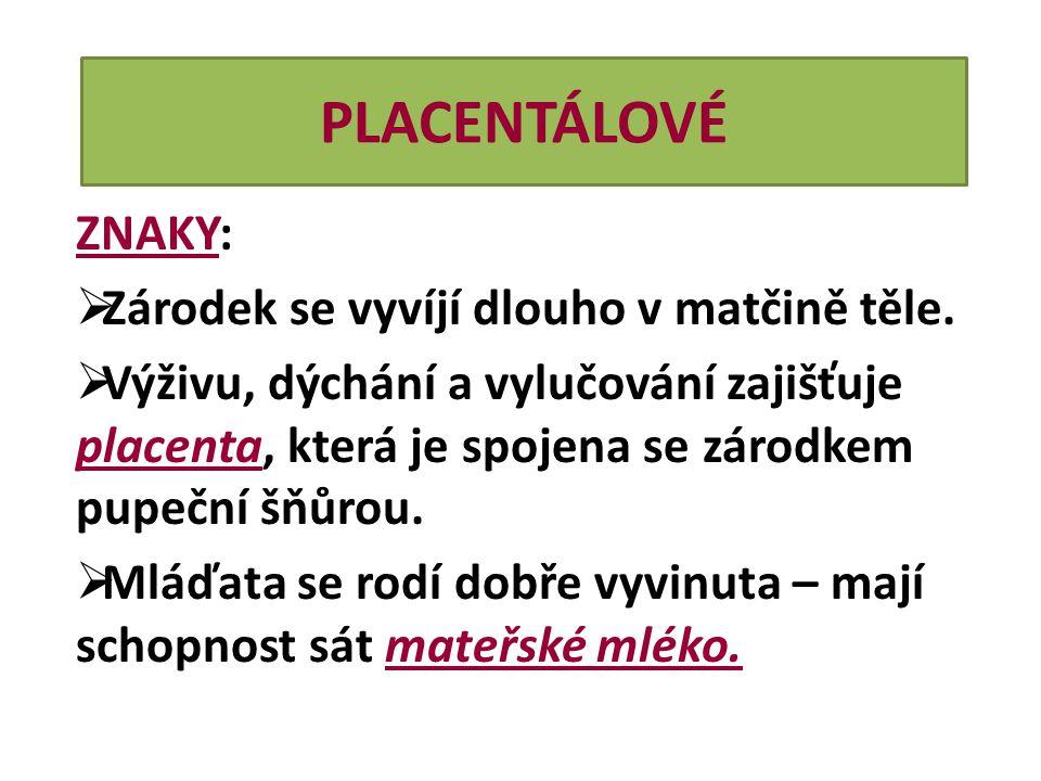 PLACENTÁLOVÉ ZNAKY:  Zárodek se vyvíjí dlouho v matčině těle.  Výživu, dýchání a vylučování zajišťuje placenta, která je spojena se zárodkem pupeční
